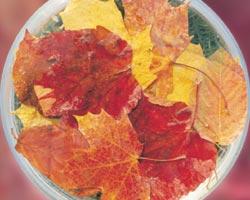AFI067: Autumn Leaves